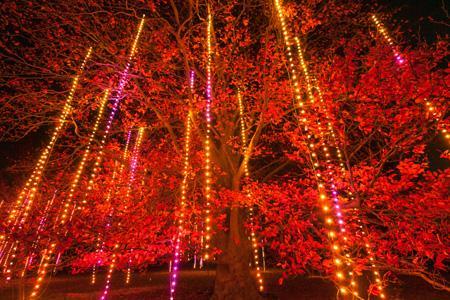 Illumination+at+Morton+Arboretum