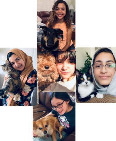 A Peek Into the Lives of Pet People